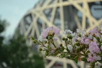 北京鸟巢前的鲜花