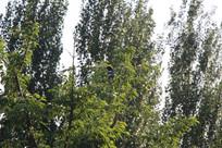 翠绿的树栖息的鸟