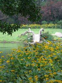 黄色野花与造型奇特的木桥