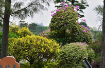 筋杜鹃树木风景