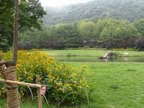 开着黄色野花的草地