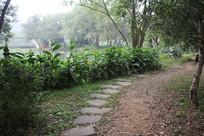 茅家埠通往龙井田的石块路