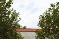 天空下树木掩映的屋顶一角
