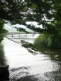 小河上的树干与远处的长桥