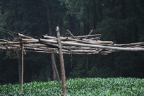 茅家埠龙井田上的木头支架