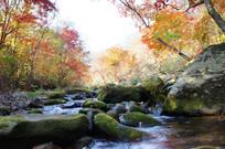 山谷小溪与枫树林