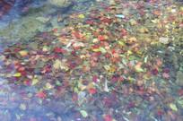 水底的红色落叶