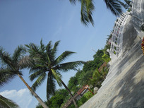 椰树旁边的拱桥
