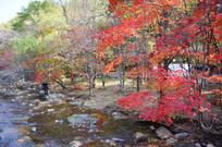 远山里的溪水与红叶