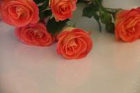桌上有倒影的钻石玫瑰