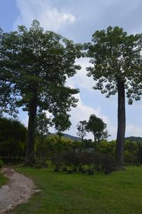 陈田花园高大树木草坪小径