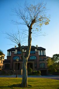 房前一棵树