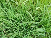 俯拍绿草地