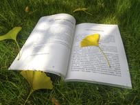 落叶书籍草地
