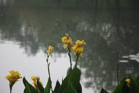 茅家埠水塘边芭蕉叶上花儿