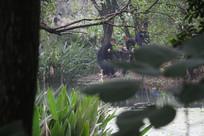 茅家埠一群摄影师在拍鸟