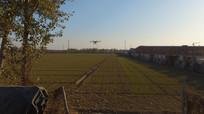 深秋的麦田