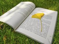 书本上银杏叶