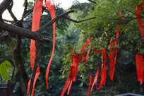 许愿树上的红丝带