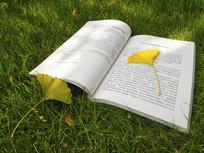 一本书两片银杏叶