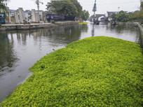 河道绿色植被