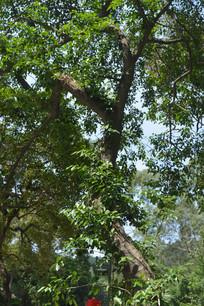 积极向上生长的树木