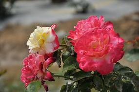 镜头下的花朵