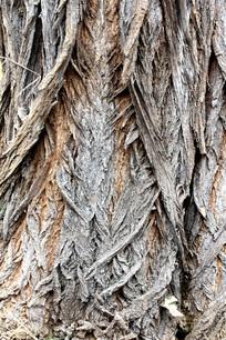 老槐树树根部树皮纹理
