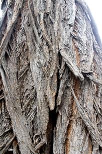 老槐树树皮纹路