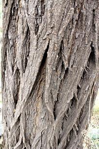 老槐树树身纹理