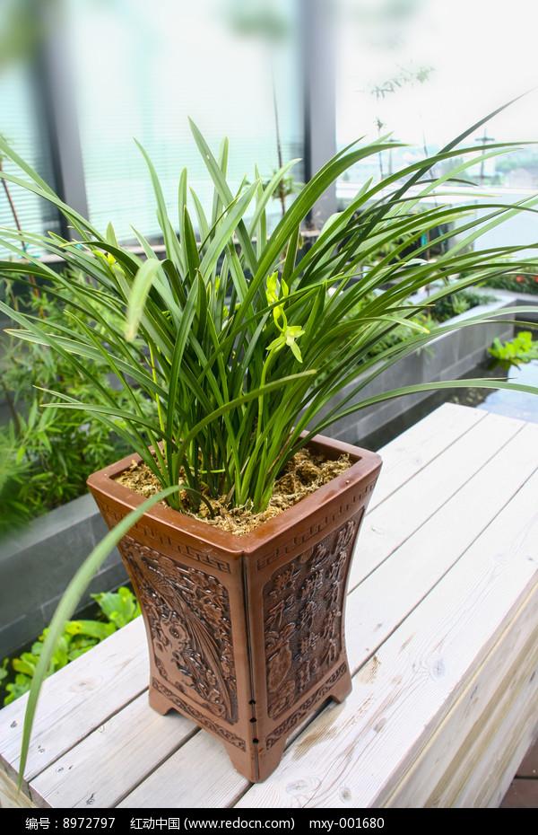 盆栽兰花图片