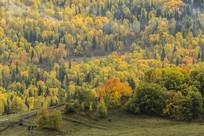 五彩灌木丛林