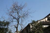 下孙文化村古风屋顶与大树
