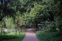 幽静的林荫小道