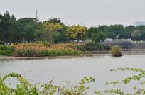 湖泊花草树木风景