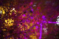 霓虹灯光下的秋叶