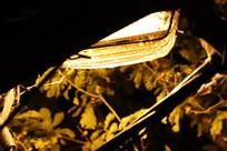 秋天防虫的灯罩