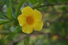 树枝上的黄色小花