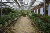 植物园盆栽