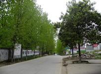 春天的乡村道路