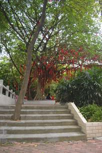 广州白云山公园祈愿树