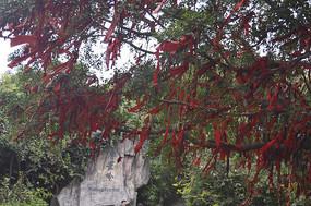 广州白云山公园许愿树
