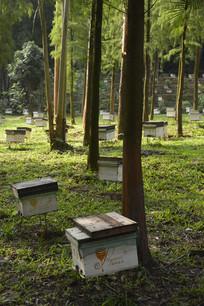 广州市白云山公园蜜蜂箱