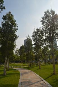 广州市儿童公园道路白桦树