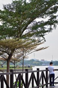 湖边的树木
