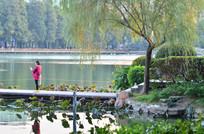 湖泊小路风景
