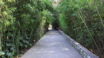 绿植树木围绕的公园道路