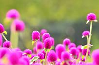 美丽的小花风景