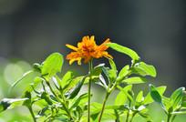 美丽的野花花草
