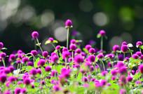 紫色花儿风景